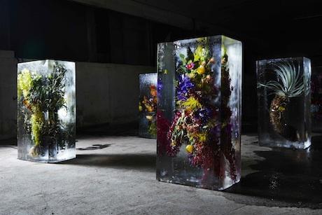 ice_flowers_11